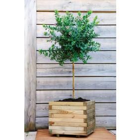 Bac à fleurs carré en bois  - 50 x 50 cm - Stockholm 50 JARDIPOLYS