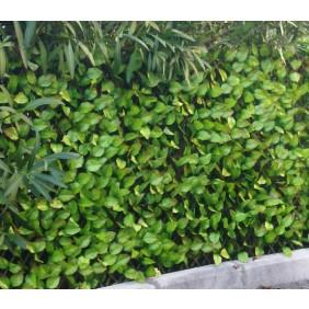 Treillis feuilles de rosier 1 x 2 m JET7GARDEN